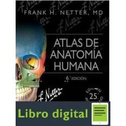 Atlas De Anatomia Humana 6 edicion Frank Netter